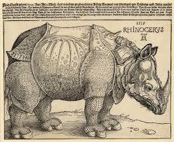 Durer Rhino