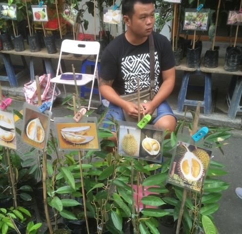 Borneo Durian